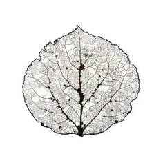 236x236 92 Best Aspen Leaf Images Home Decor, Bathroom And