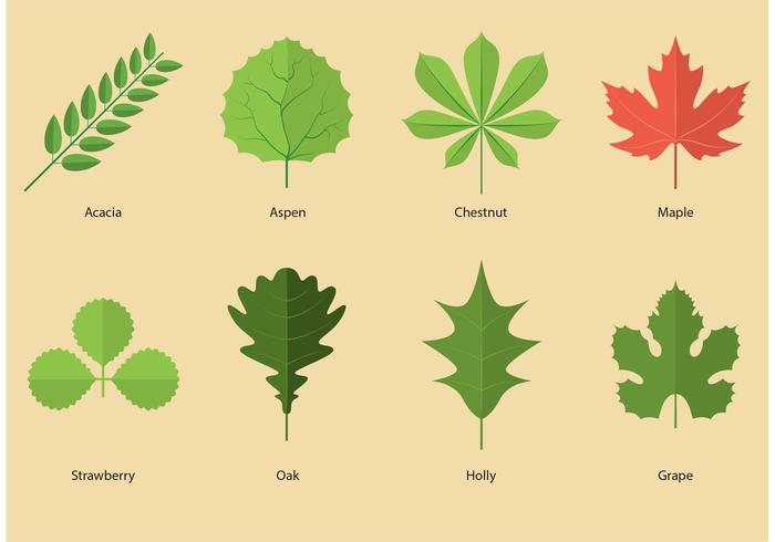 700x490 Leaves Vectors