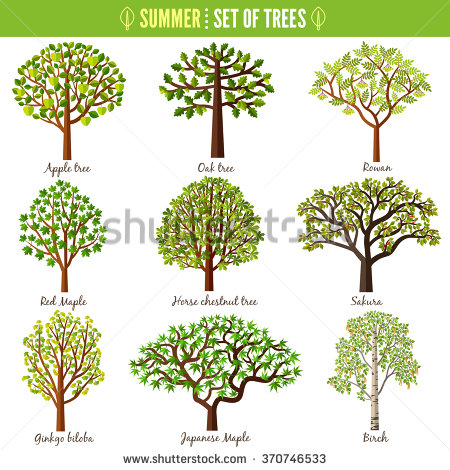 450x470 Set Of Summer Trees On White Background Apple Tree Oak Tree Rowan
