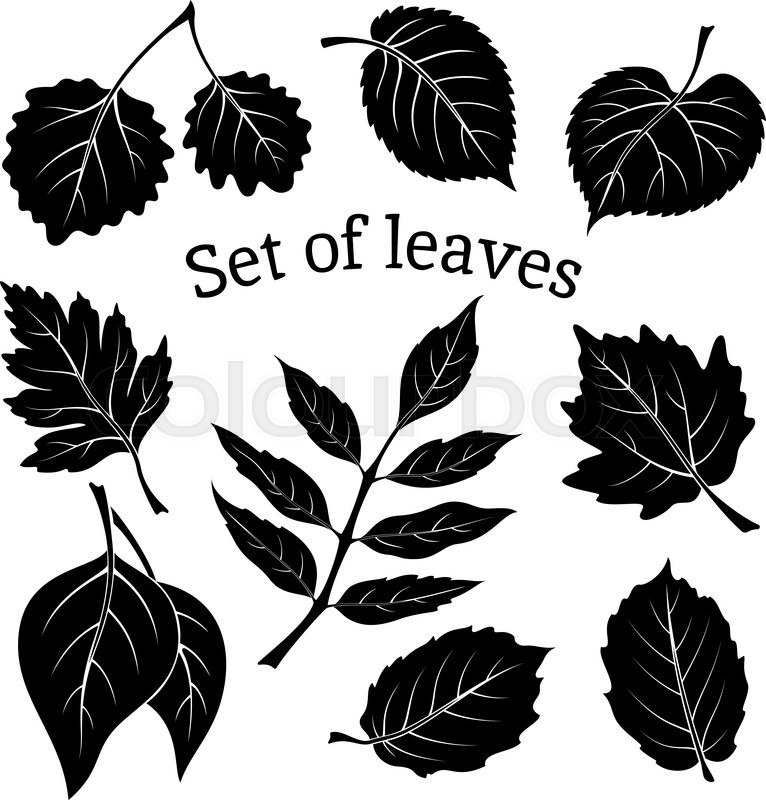 766x800 Set Of Pictograms, Plant Leaves, Hawthorn, Poplar Silver, Aspen