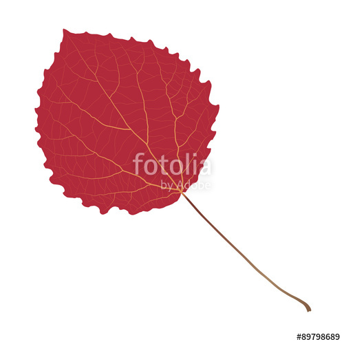 500x500 Red Leaf Aspen Stock Image And Royalty Free Vector Files On