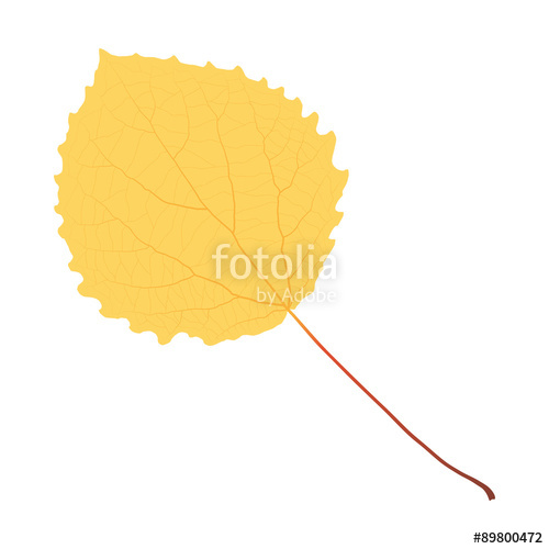 500x500 Yellow Aspen Leaf Stock Image And Royalty Free Vector Files On