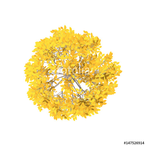 500x500 Aspen Tree. Isolated On White Background. Top View. Stock Image