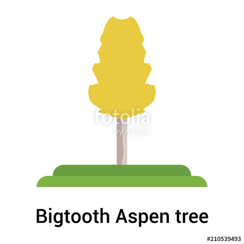 500x500 Bigtooth Aspen Tree Icon Vector Sign And Symbol Isolated On White