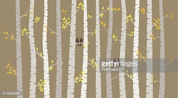 362x200 Vector Birch Or Aspen Trees With Autumn Leaves Stock Vectors