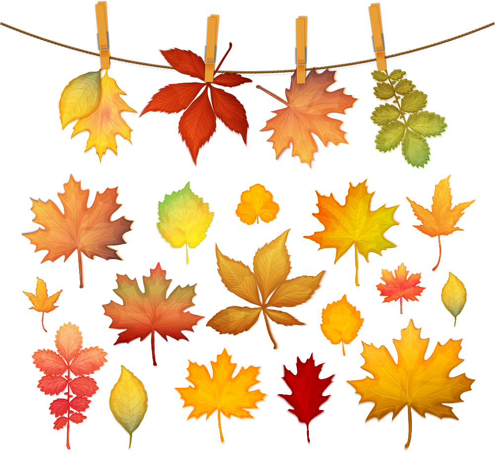 1000x916 Autumn Leaf Color Maple Leaf