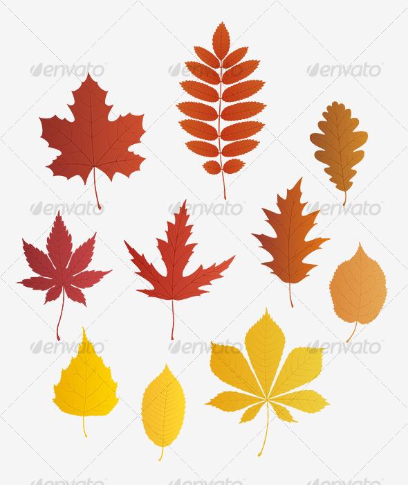 590x700 Autumn Leaves