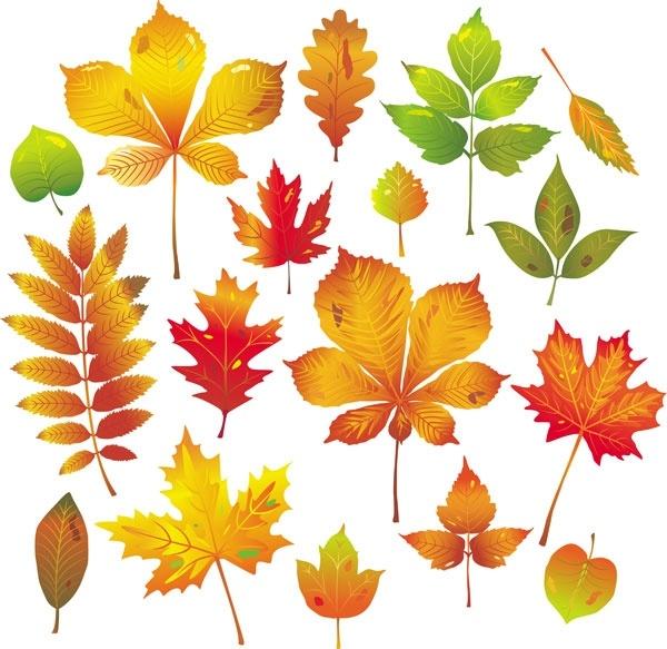 600x583 Autumn Leaves Vector Free Vector In Adobe Illustrator Ai ( .ai