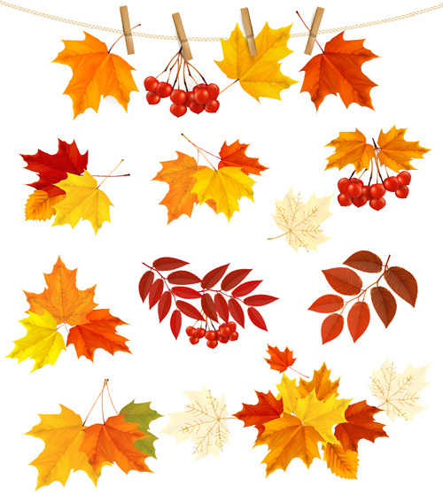 500x557 Autumn Leaves With Fruit Vector Free Vector In Encapsulated