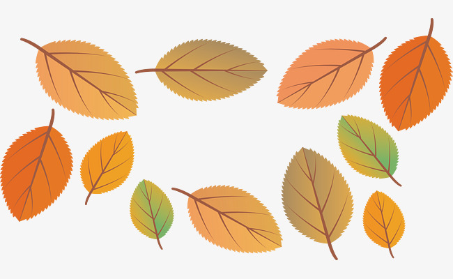 650x400 Beautiful Autumn Leaves, Vector Png, Golden Fall, Autumn Leaves