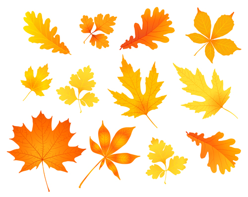 500x397 Beautiful Autumn Leaves Icons Vector 03 Free Download