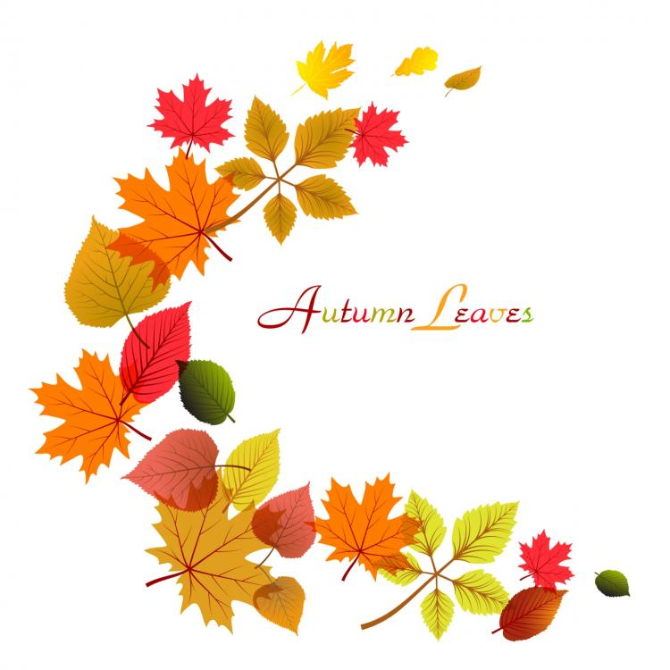 750x750 Flowing Autumn Leaves Frame Free Vector 4vector