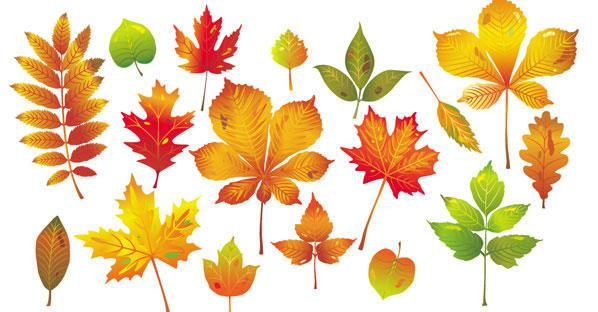 598x312 Autumn Leaves Vector 123freevectors