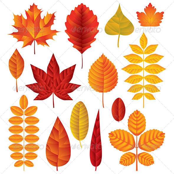 590x590 Autumn Leaves Vector Set By Andegro4ka Graphicriver