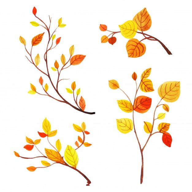 626x626 Autumn Leaves Vectors, Photos And Psd Files Free Download