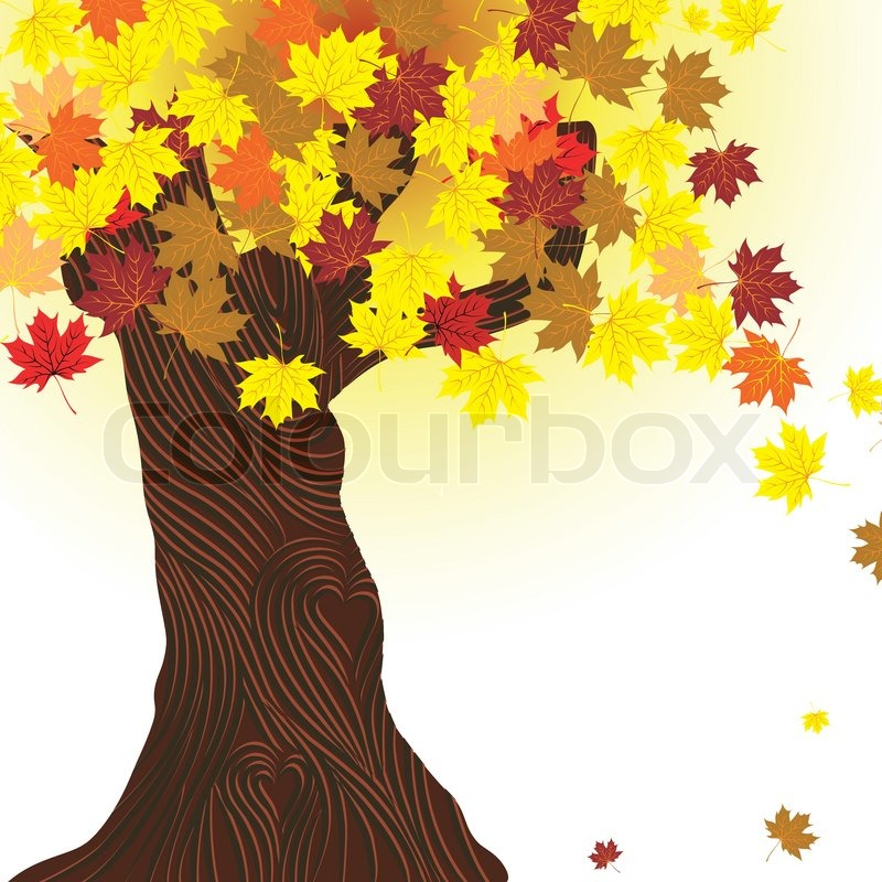 800x800 Beautiful Autumn Tree Vector Maple Background Design Element Fall