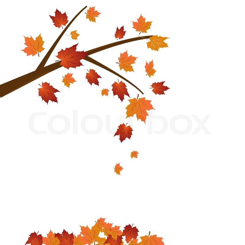 800x800 Branch Of Maple Tree, Autumn Leaf Fall. Vector Stock Vector