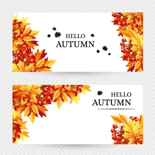 539x539 Banners Autumn Vector Material Free Download