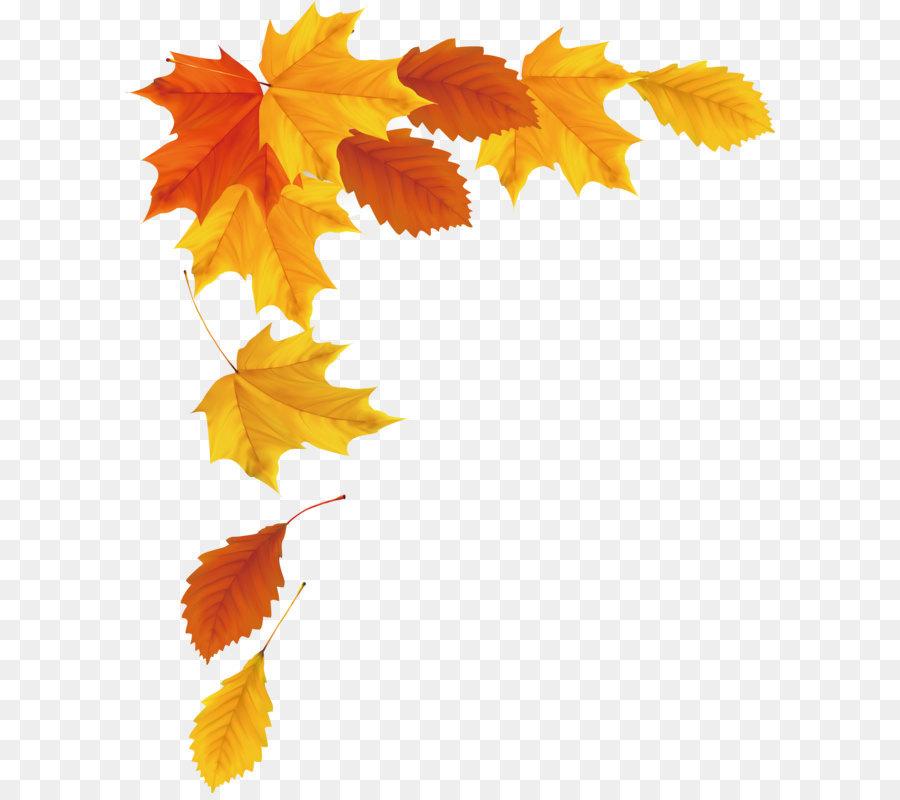 900x800 Maple Leaf Autumn