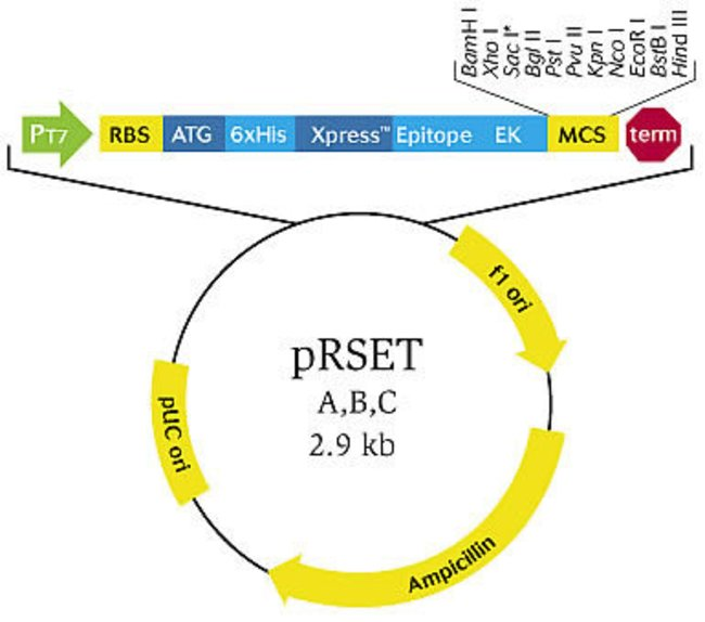 650x574 Prset A, B, C Bacterial Expression Vectors
