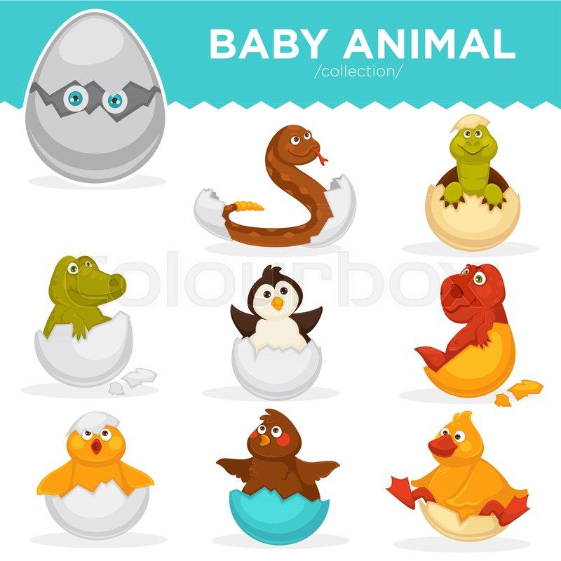 800x800 Baby Animals Hatch Eggs Or Cartoon Pets Hatching. Vector Flat