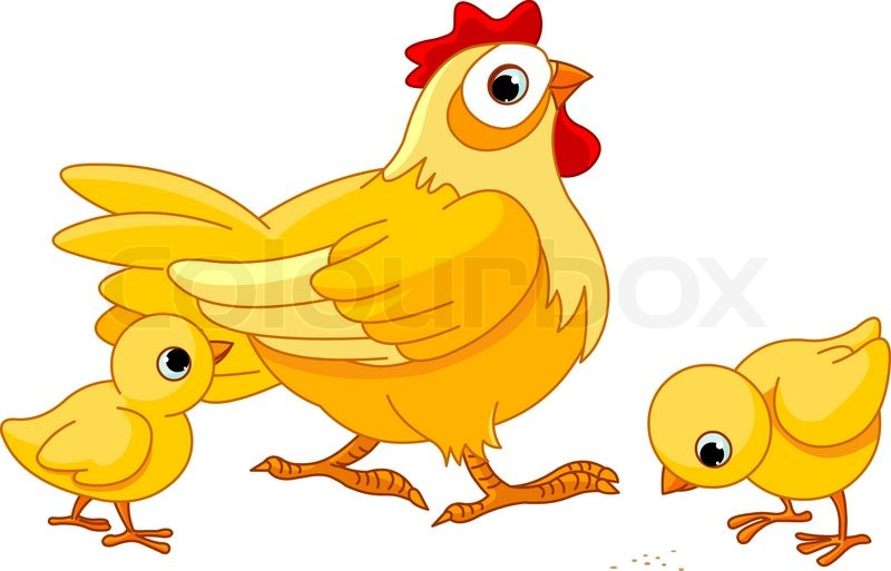 800x513 Mother Hen With Its Baby Chicks Stock Vector Colourbox