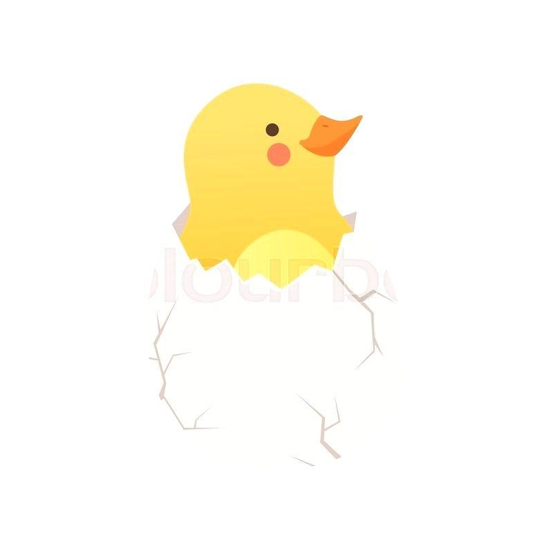 800x800 Baby Duck Hatching Duckling Baby Mallard Duck Hatching Footygnv.club