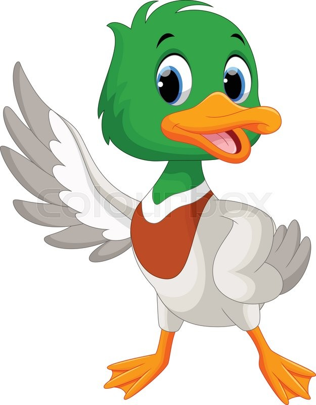 625x800 Vector Illustration Of Cute Baby Duck Waving Its Wings Isolated On