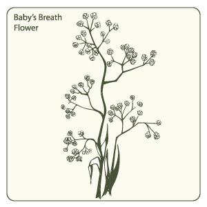 Babys Breath Vector