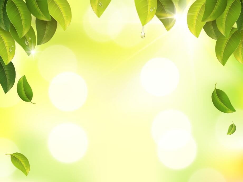 921x688 Green Leaves With Sunlight Blurs Background Vector