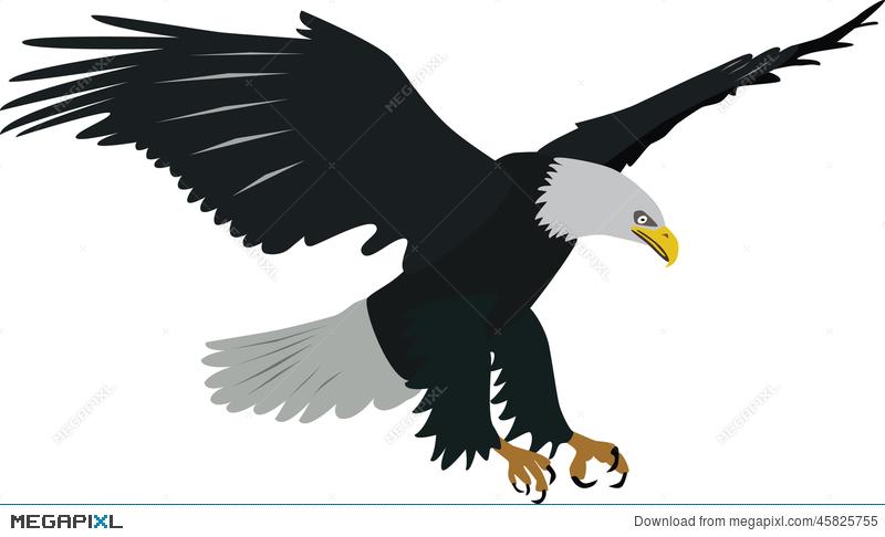 800x486 Bald Eagle Vector Illustration 45825755