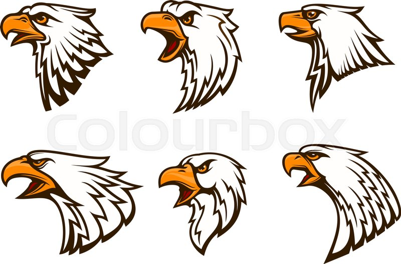 800x526 Bald Eagle Vector Emblems Set. Isolated Icons Of Hawk With Beak