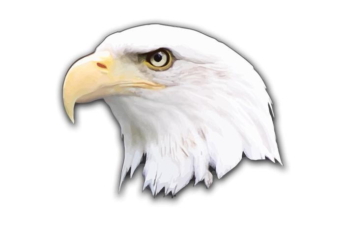 700x490 Eagle Vector