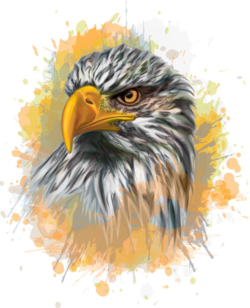 800x985 Bald Eagle