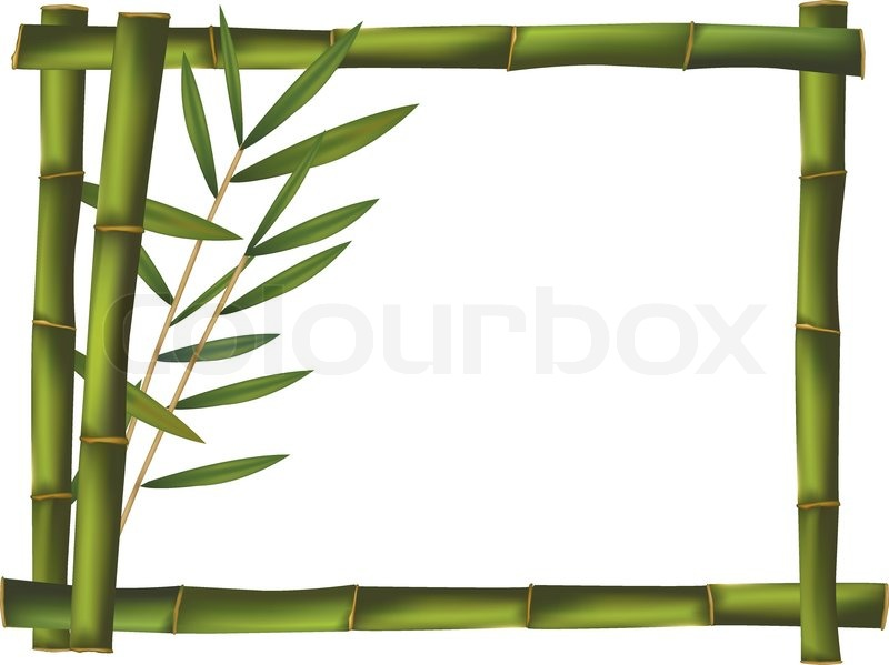 800x599 Green Bamboo Frame Made Of Stems. Vector. Stock Vector Colourbox