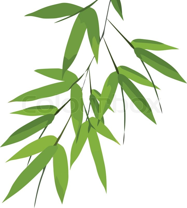 721x800 Bamboo Leaves, Vector Stock Vector Colourbox