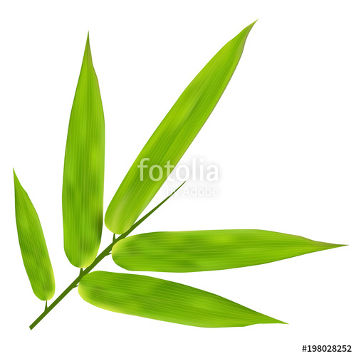 500x500 Illustration Of Bamboo Leaves On White Background Stock Image