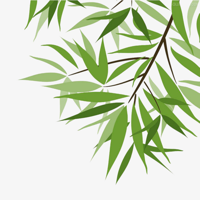 650x651 Lush Bamboo Leaves, Bamboo Clipart, Bamboo Leaf Vector, Bamboo Png