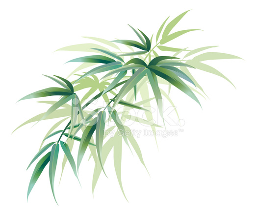 524x440 Tropical Bamboo Leaves Decoration Green Stock Vector
