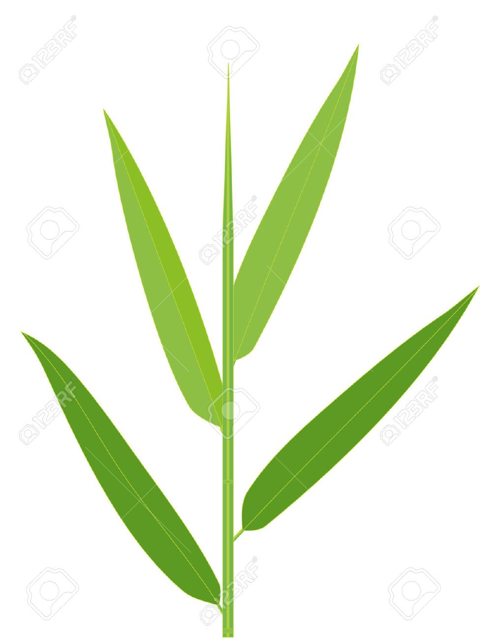 992x1300 Vector Illustration Of Bamboo Leaves Isolated On White Trees