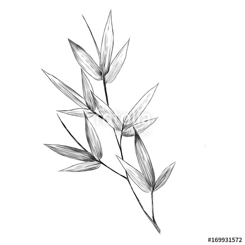 500x500 Bamboo Leaves Sketch Vector Graphics Monochrome Bitmap Greens