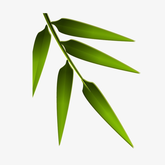 650x650 Bamboo Leaves, Bamboo Vector, Bamboo Png And Vector For Free Download