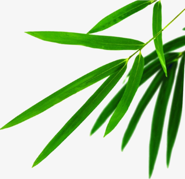 650x628 Bamboo Leaves Download, Bamboo Clipart, Bamboo Leaf Vector, Green