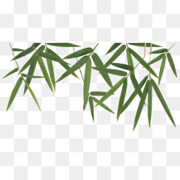 260x260 Bamboo Leaves Vector Png, Vectors, Psd, And Clipart For Free