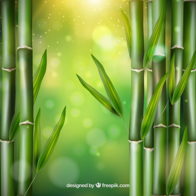 626x626 Bamboo Leaves Vector Vector Free Download