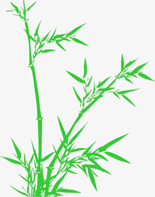 650x826 Lucky Bamboo Vector, Bamboo Clipart, Lucky Bamboo, Vector Png