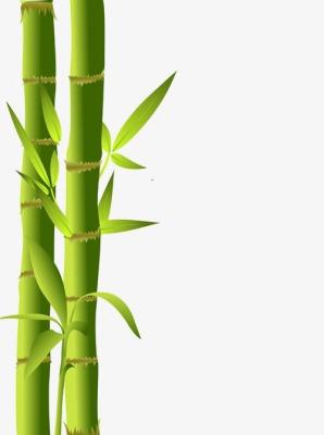 298x400 Bamboo Bamboo Silhouette, Bamboo Clipart, Bamboo Vector, Bamboo