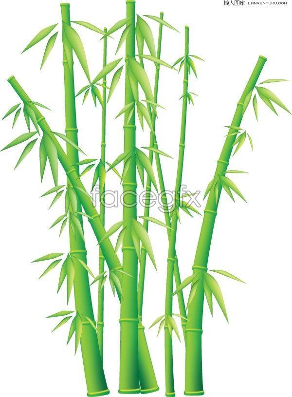 Bamboo Vector Art