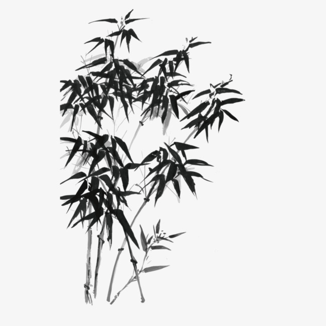 650x651 Ink Bamboo Vector, Bamboo Vector, Ink, Bamboo Png And Vector For