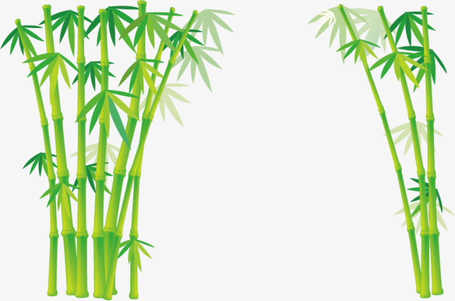 650x430 Bamboo Vector, Bamboo, Plant, Bamboo Forest Png And Vector For